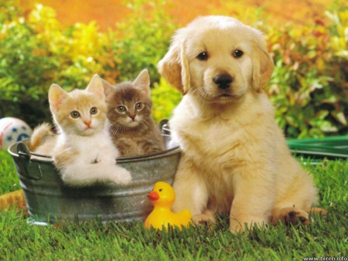 the best pets to have at home